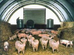 Быстро-возводимая животноводческая ферма