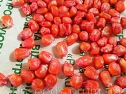 Семена кукурузы, гибрид - Моника 350 МВ от производителя