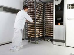 Яйца инкубационные КООБ 500 Польша,Чехия,цыплята, индюшата