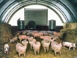 Быстро-возводимая животноводческая ферма - фото 1