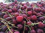 Гидрокулер для охлаждения плодоовощной продукции - фото 5