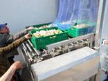 Гидрокулер для охлаждения плодоовощной продукции - фото 7