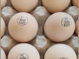 Инкубационные яйца маркерованые от птицефабрик Европы индюки , гуси, куры, утки