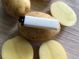 Картофель - Огромный объём - идеальное качество - фото 2
