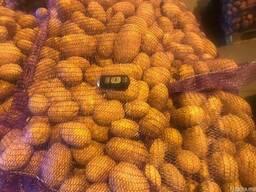 Картофель - Огромный объём - идеальное качество - фото 3