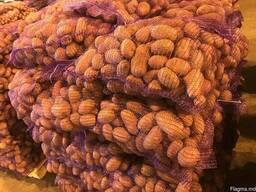 Картофель - Огромный объём - идеальное качество - фото 6