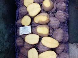 Картофель оптом Беларусь - photo 3