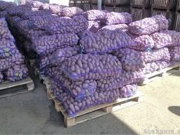 Картофель оптом с доставкой по всей Молдовы
