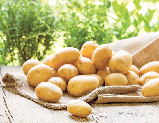 Картофель мытый продовольственный