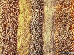 Комбинированные зерноотходы для с/ж - фото 1