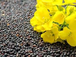 Куплю масличные, зерновые, бобовые