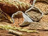Купим сельхозпродукцию - фото 1