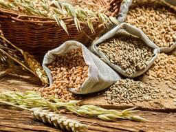 Куплю зерно , кукурузу, подсолнух и другие зерновые кул