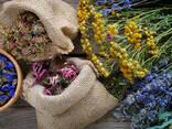 Лекарственные травы - photo 1