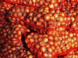Лук свежий из Беларуси Экспорт