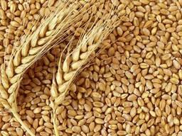 Мягкая пшеница FOB Новороссийск/Азов, Порты черного моря.
