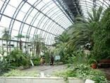 Оранжерея, зимний сад, зимний огород - фото 2