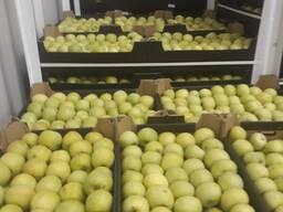Продам яблоки Golden/Idared