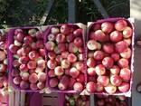 Продаём летние сорта яблока и сливы - фото 1