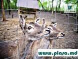Сетка металлическая в Молдове, заборы, проволока - фото 4