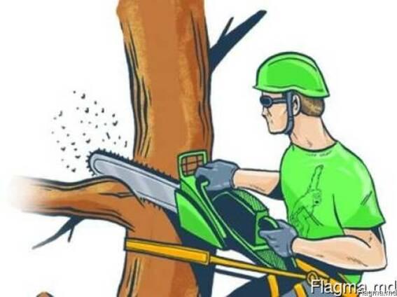 Спил, обрезка деревьев в сложных условиях. Покос травы