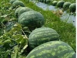 Фрукты, овощи, сухофрукты, веники из Узбекистана