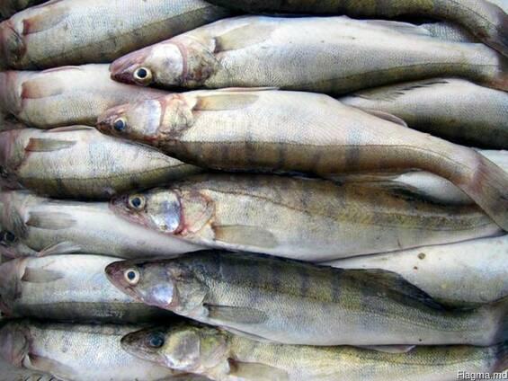 Свежая и свежемороженая речная рыба