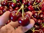 Sweet cherry from Bulgaria - photo 2