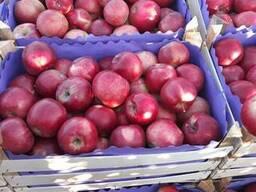 Яблоки доставка.