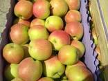 Яблоки молдавские Слава Победителю 6 оптом от производителя - фото 1