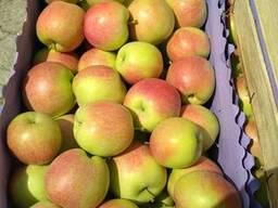 Яблоки молдавские Слава Победителю 6 оптом от производителя