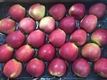 Яблоки оптом - фото 2