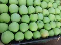 Яблоки оптом - фото 3