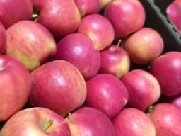 Яблоки от производителя оптом от 20 тон
