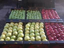 Яблоко свежее купим.