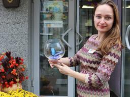 Живые бабочки - продажа готового бизнеса, франшиза, сотрудни